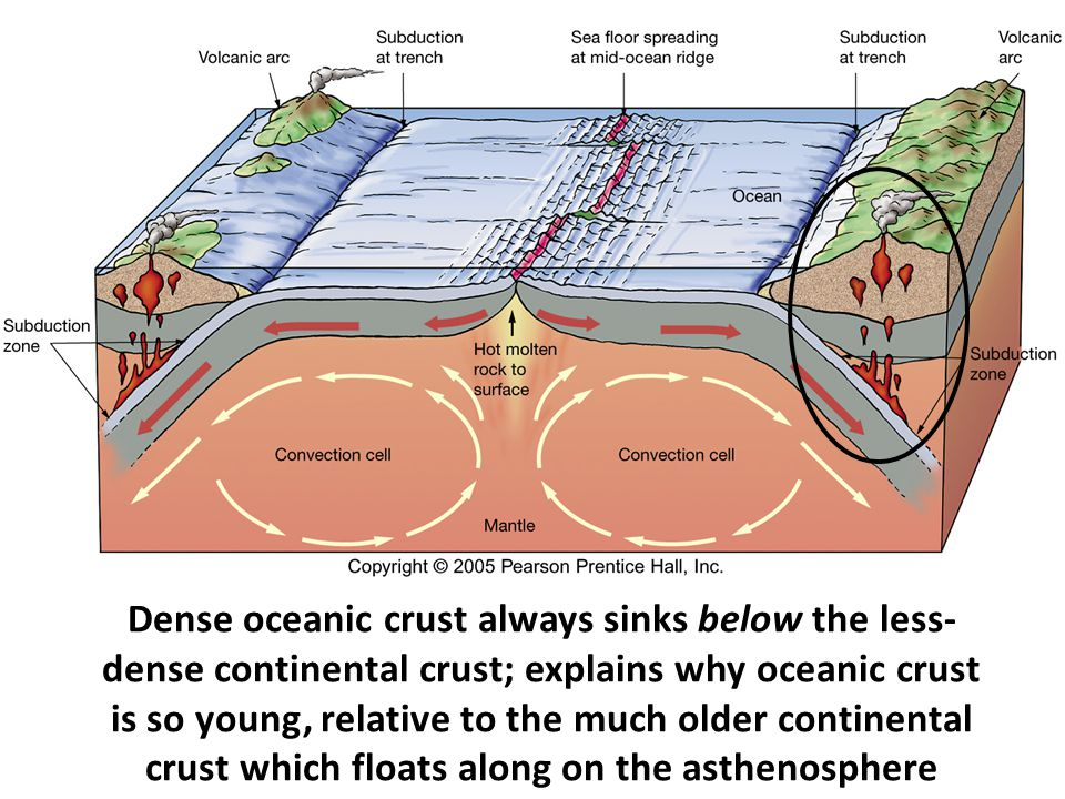 Dense oceanic crust always sinks below the less-dense continental crust; explains why oceanic crust is so young, relative to the much older continental crust which floats along on the asthenosphere