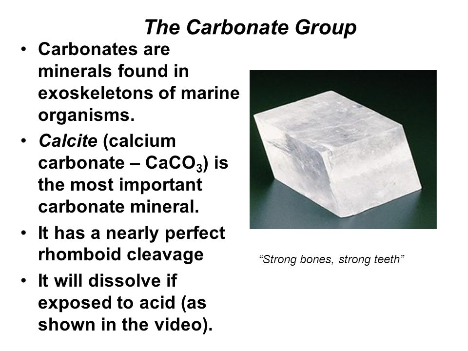 The Carbonate Group Carbonates are minerals found in exoskeletons of marine organisms.