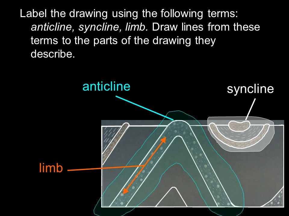 anticline syncline limb