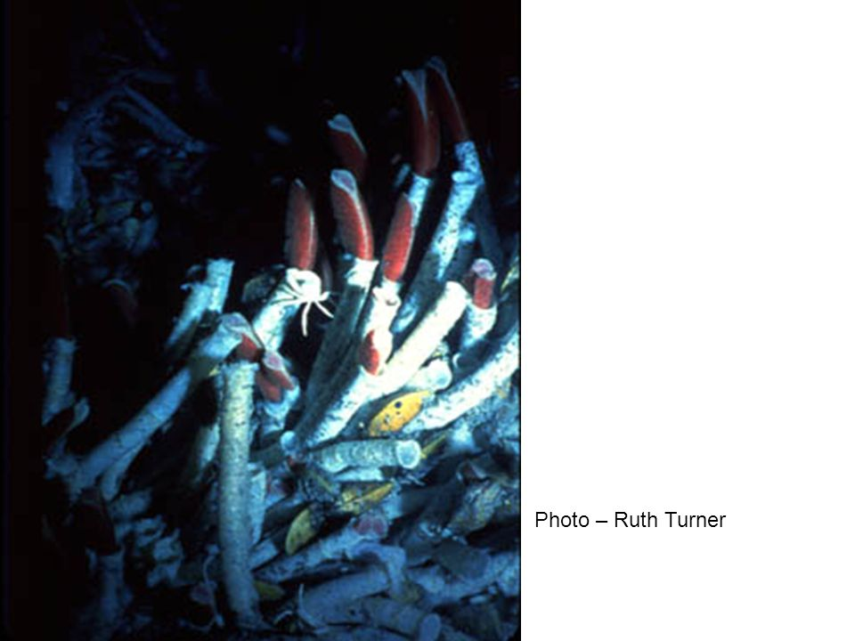 Photo – Ruth Turner