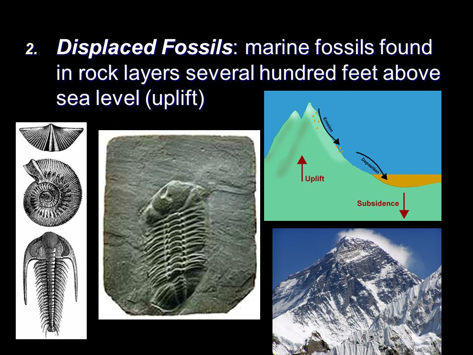 Displaced Fossils: marine fossils found in rock layers several hundred feet above sea level (uplift)