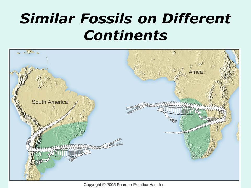 Similar Fossils on Different Continents