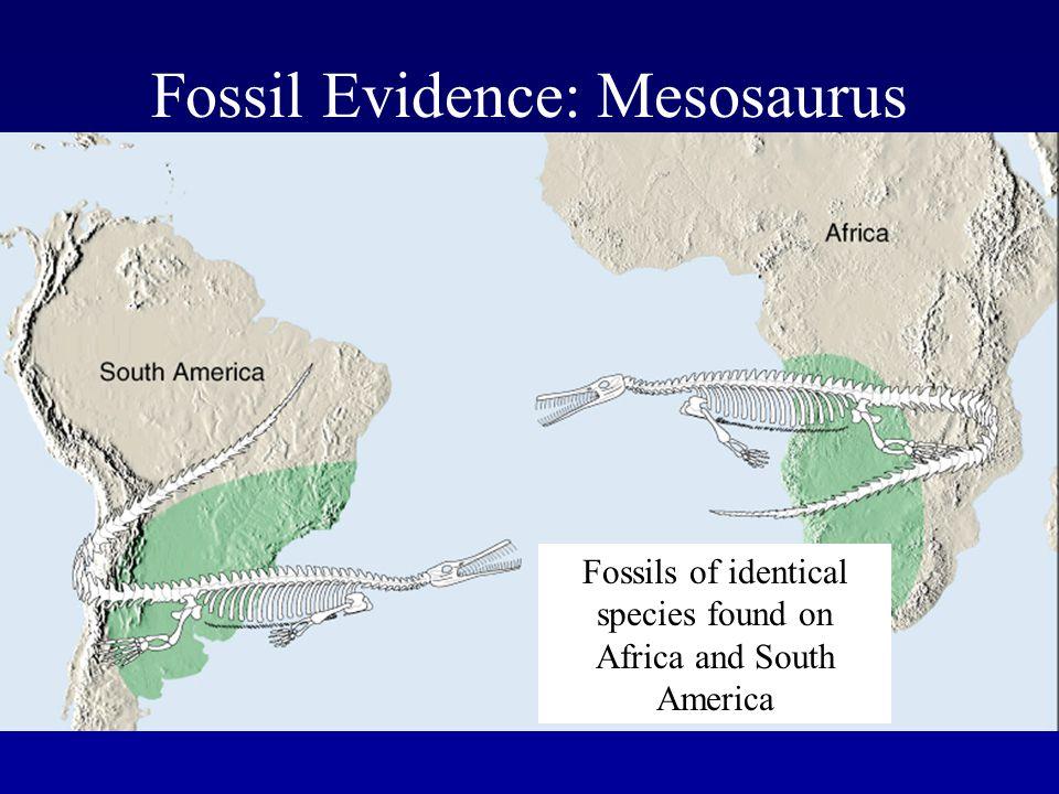 Fossil Evidence: Mesosaurus