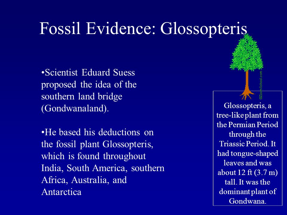 Fossil Evidence: Glossopteris