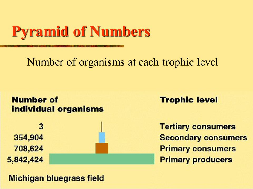 Number of organisms at each trophic level