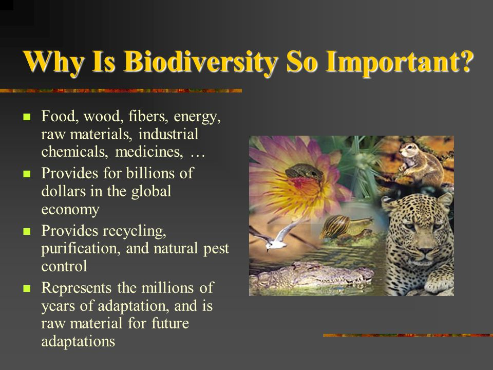 Why Is Biodiversity So Important