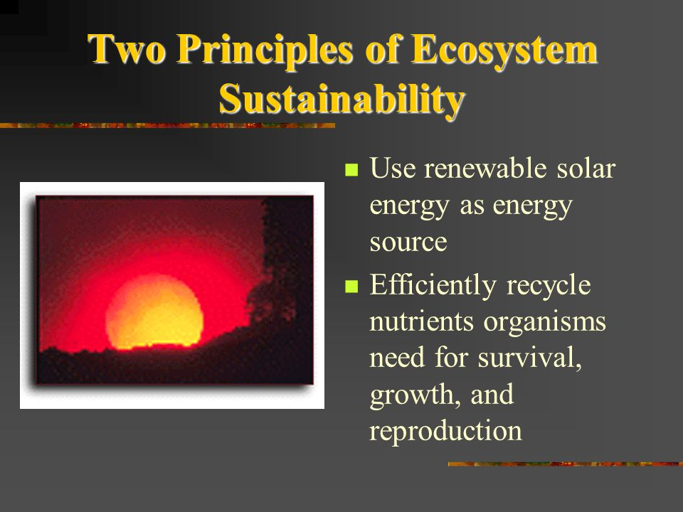 Two Principles of Ecosystem Sustainability