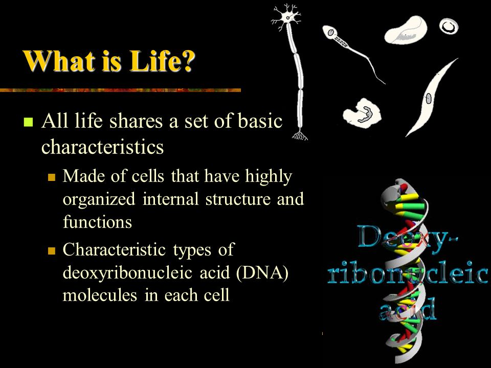 What is Life All life shares a set of basic characteristics