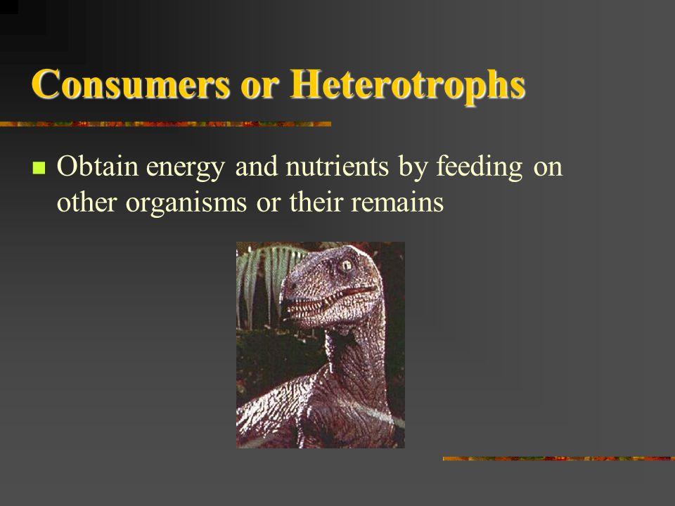 Consumers or Heterotrophs