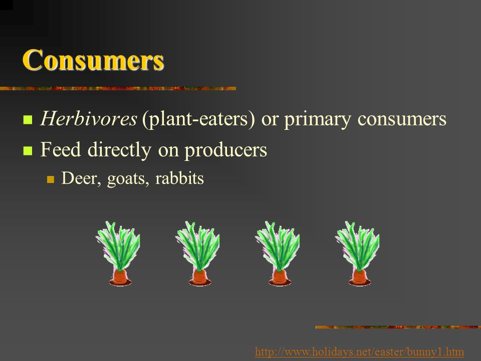 Consumers Herbivores (plant-eaters) or primary consumers