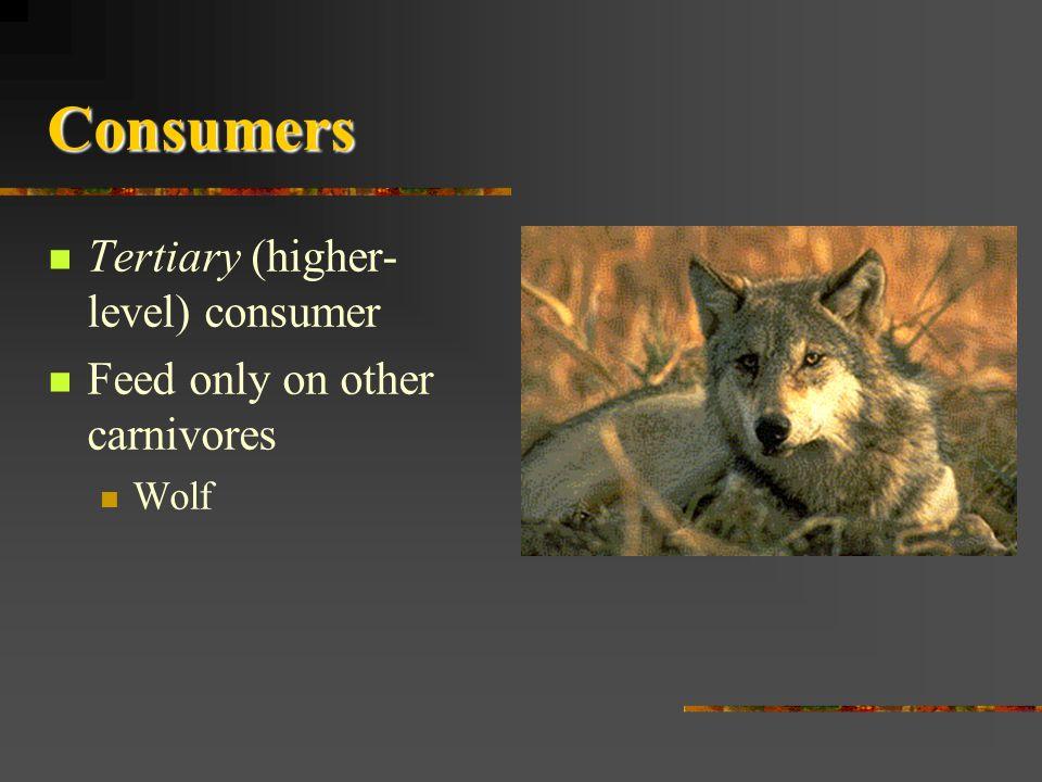 Consumers Tertiary (higher-level) consumer