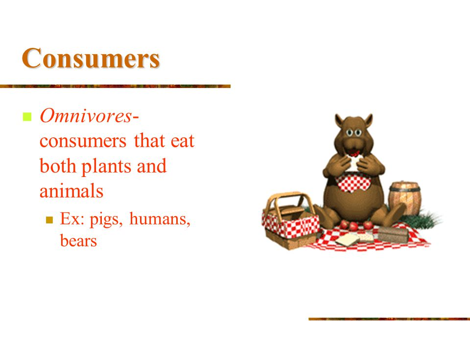 Consumers Omnivores- consumers that eat both plants and animals