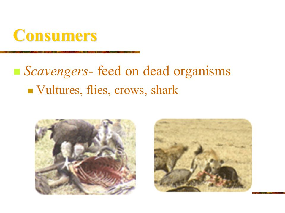 Consumers Scavengers- feed on dead organisms