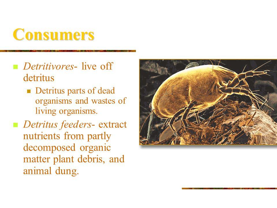 Consumers Detritivores- live off detritus