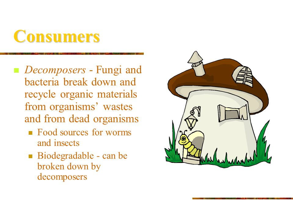 Consumers Decomposers - Fungi and bacteria break down and recycle organic materials from organisms' wastes and from dead organisms.