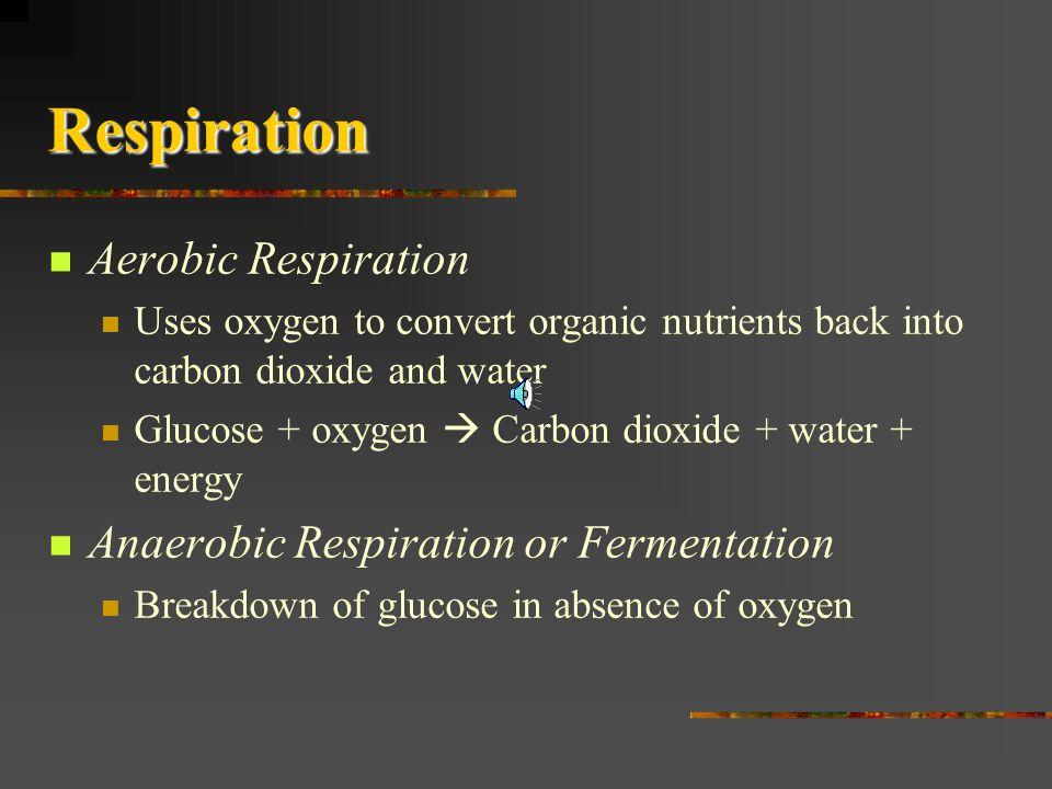 Respiration Aerobic Respiration Anaerobic Respiration or Fermentation