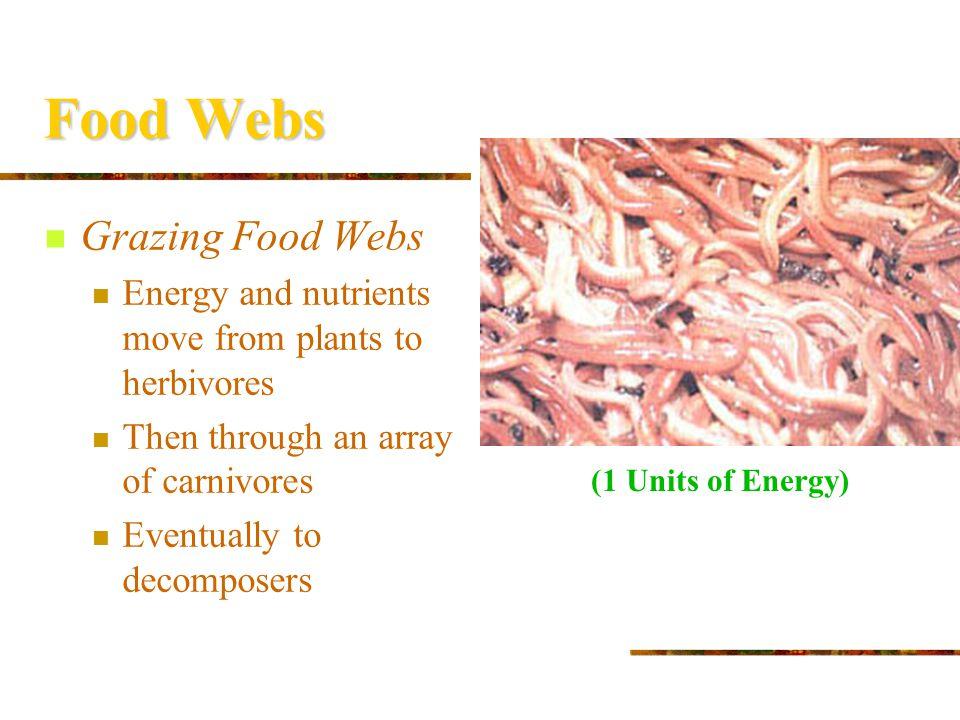 Food Webs Grazing Food Webs
