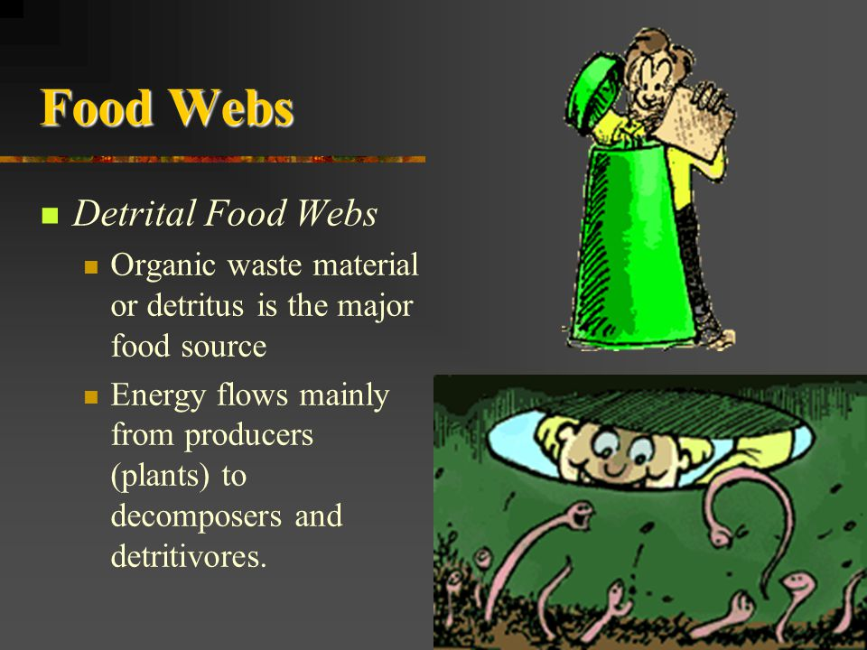 Food Webs Detrital Food Webs