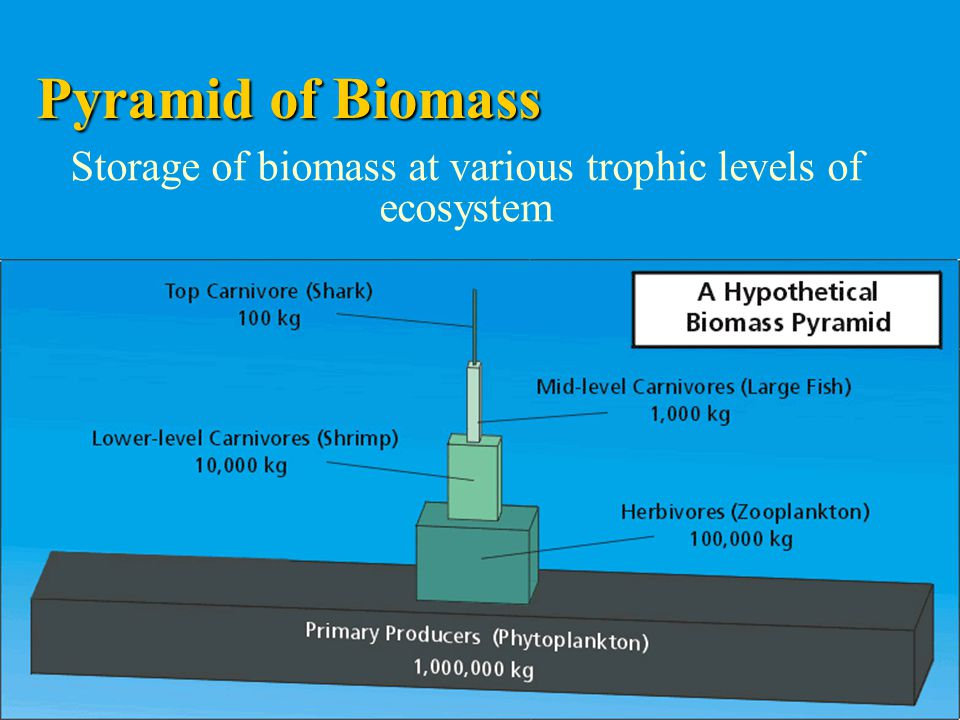 Storage of biomass at various trophic levels of ecosystem