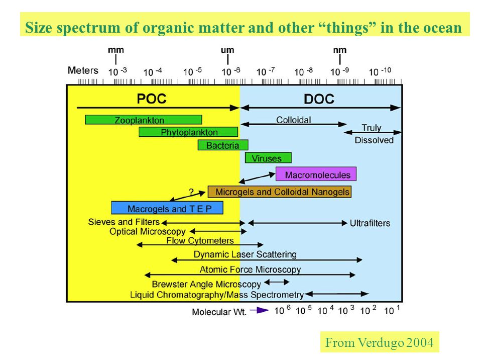 Size spectrum of organic matter and other things in the ocean