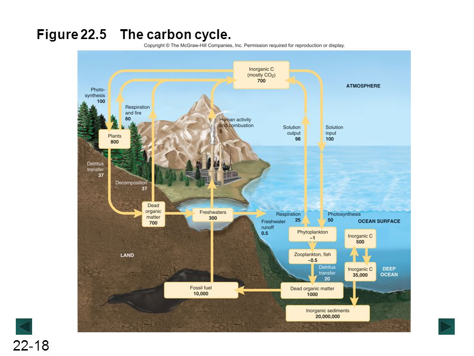 Figure 22.5 The carbon cycle.