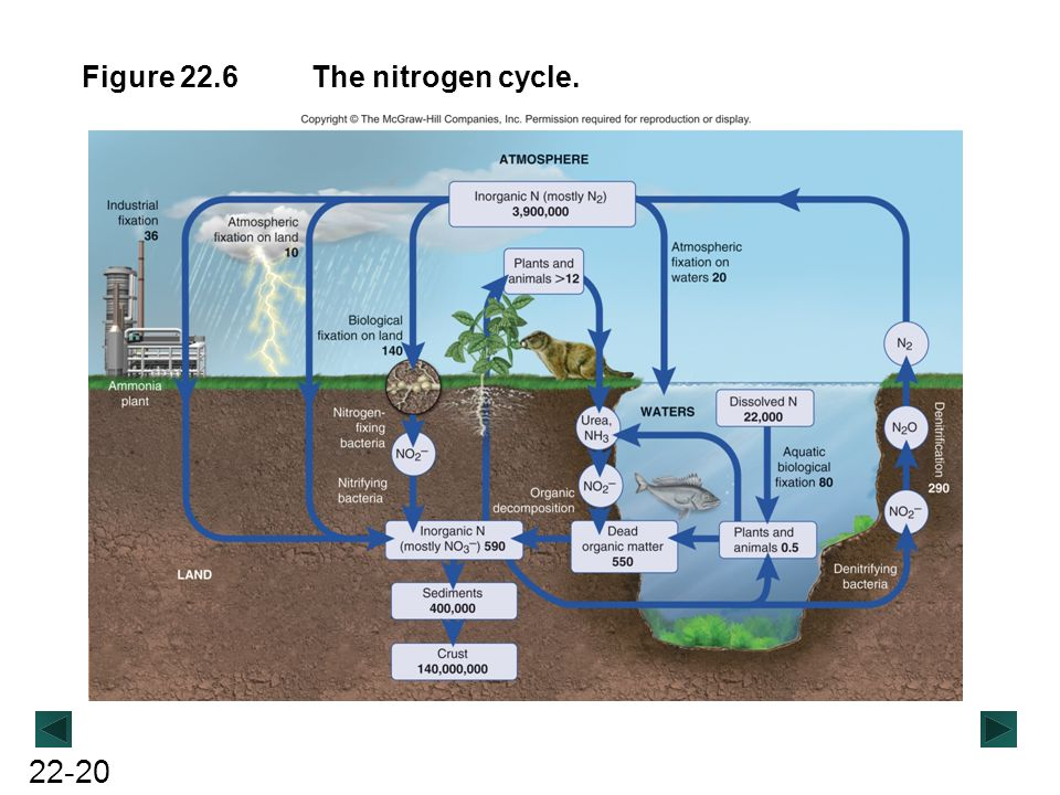 Figure 22.6 The nitrogen cycle.
