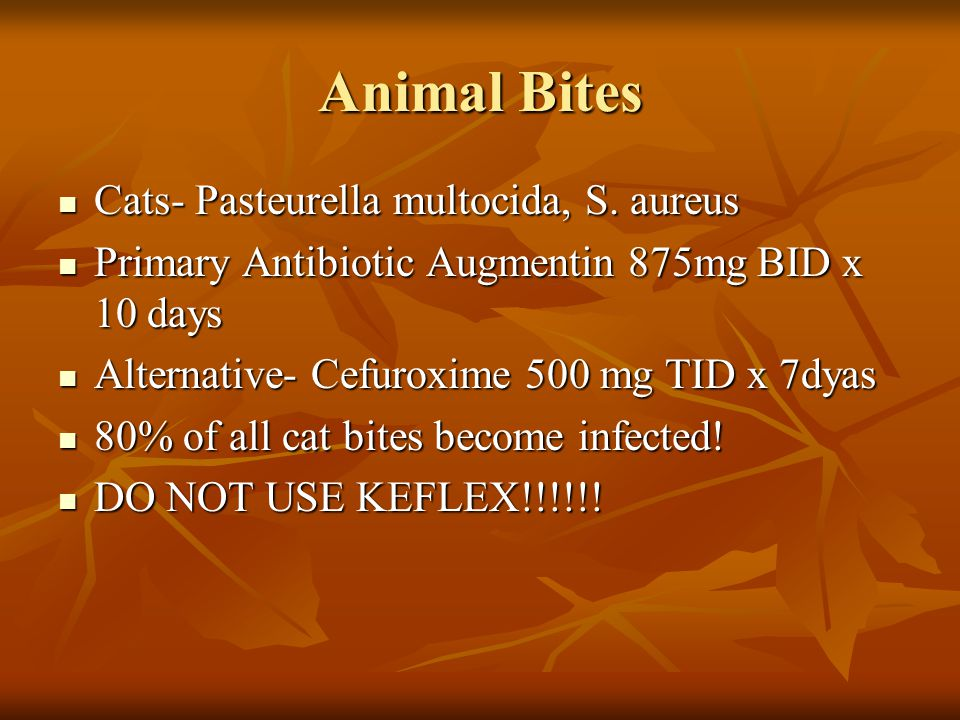 Animal Bites Cats- Pasteurella multocida, S. aureus