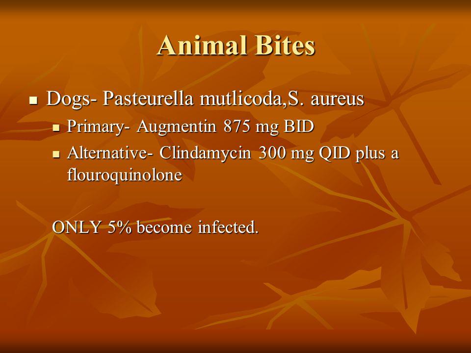 Animal Bites Dogs- Pasteurella mutlicoda,S. aureus