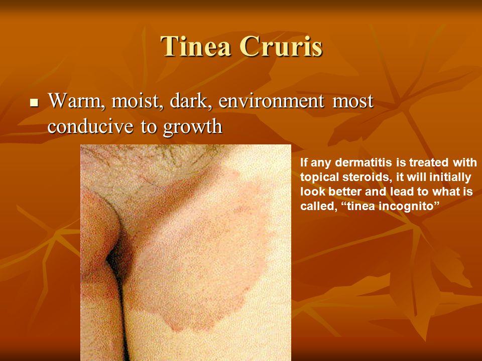 Tinea Cruris Warm, moist, dark, environment most conducive to growth