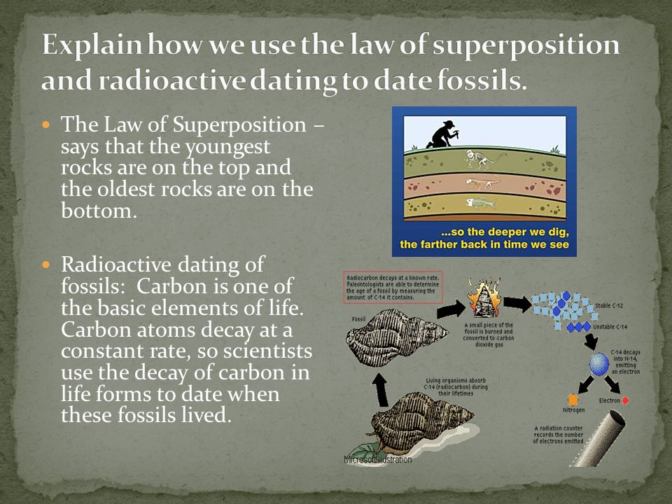 Explain how we use the law of superposition and radioactive dating to date fossils.