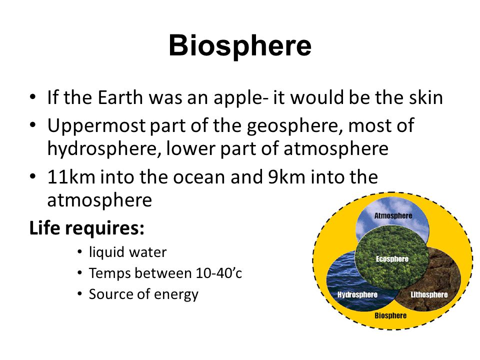 Biosphere If the Earth was an apple- it would be the skin