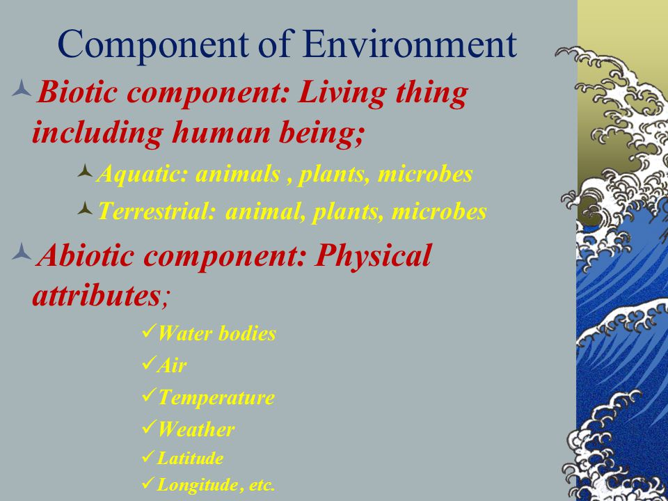 Component of Environment