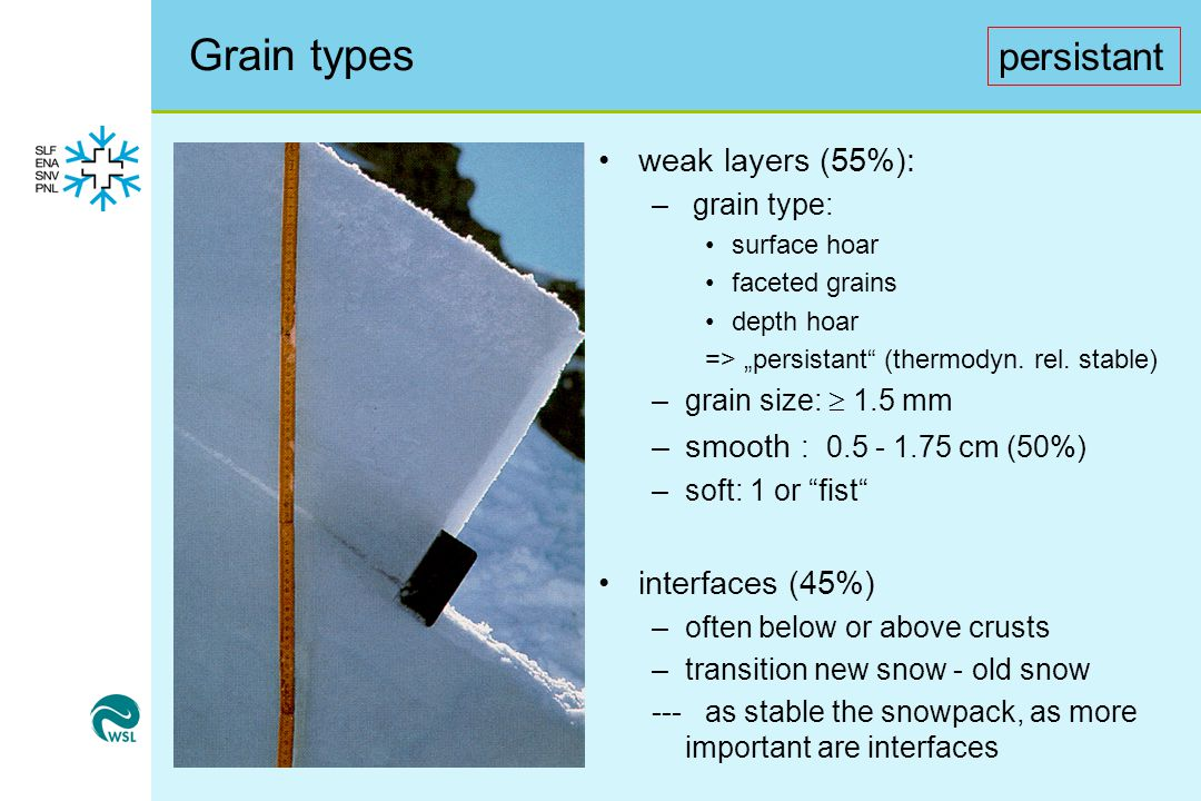 Grain types persistant weak layers (55%): smooth : 0.5 - 1.75 cm (50%)