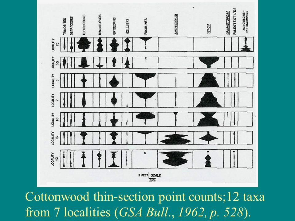 Cottonwood thin-section point counts;12 taxa