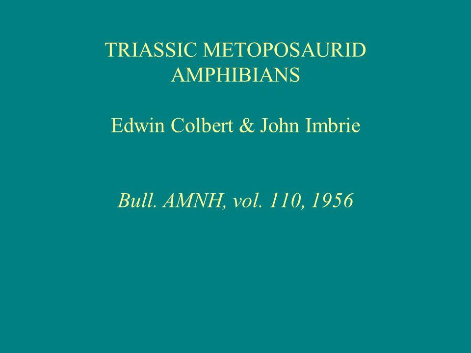 TRIASSIC METOPOSAURID AMPHIBIANS Edwin Colbert & John Imbrie Bull