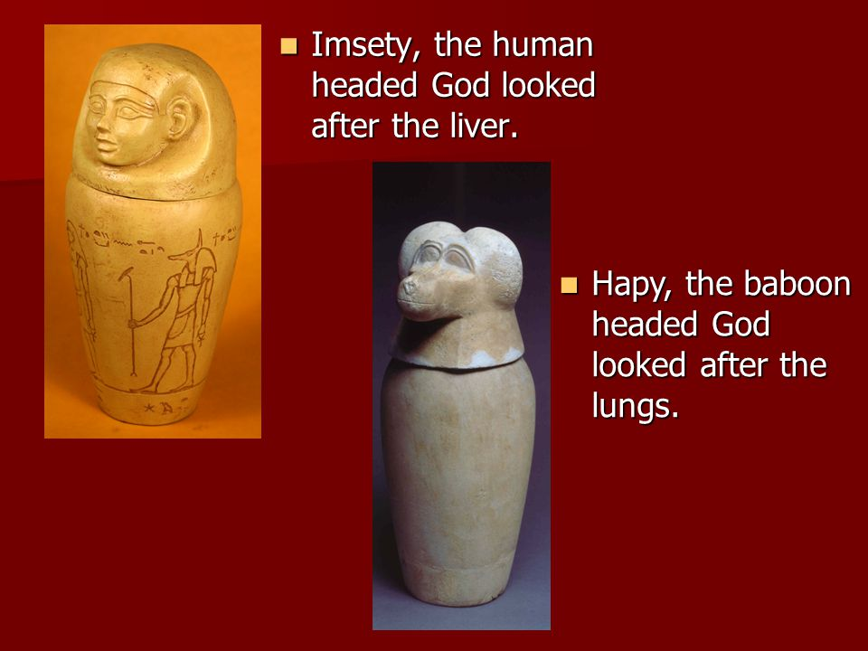 Imsety, the human headed God looked after the liver.