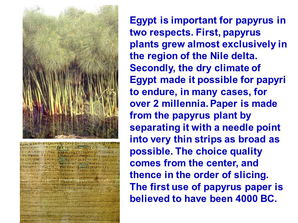 Egypt is important for papyrus in two respects