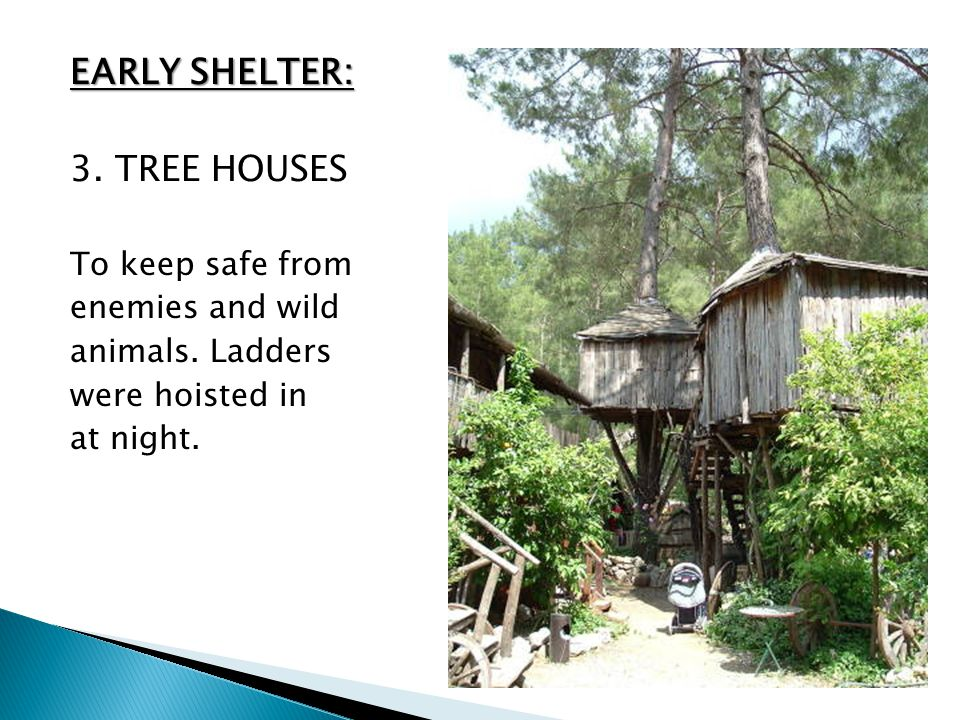 EARLY SHELTER: 3. TREE HOUSES To keep safe from enemies and wild