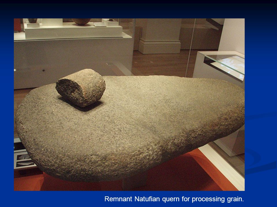 Remnant Natufian quern for processing grain.