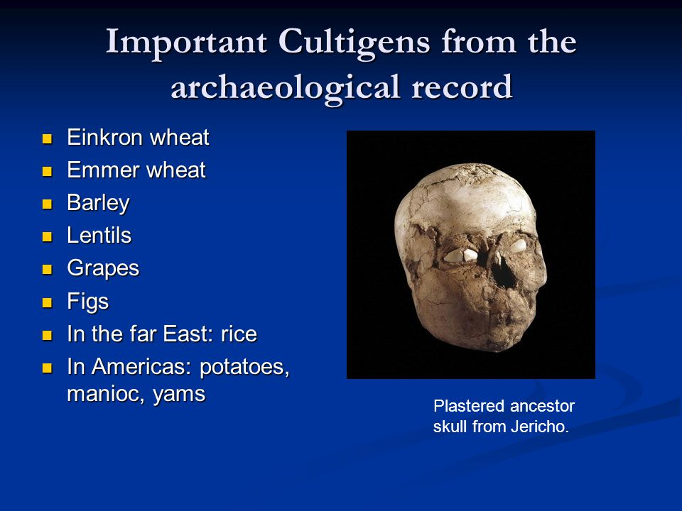 Important Cultigens from the archaeological record