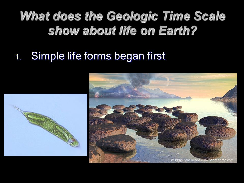 What does the Geologic Time Scale show about life on Earth