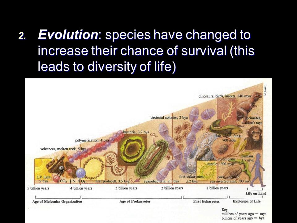 Evolution: species have changed to increase their chance of survival (this leads to diversity of life)