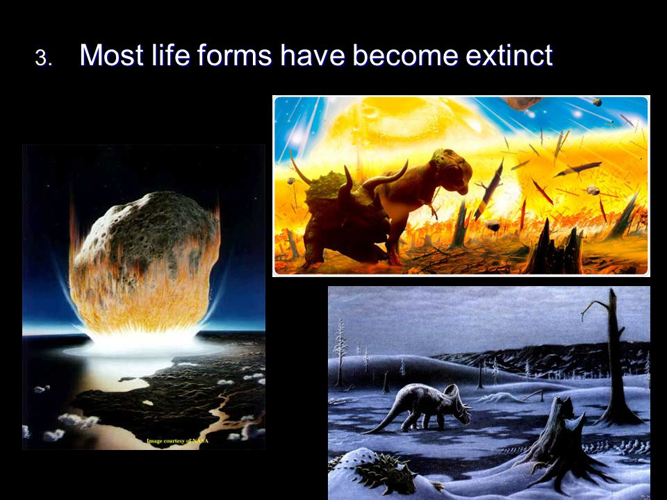 Most life forms have become extinct