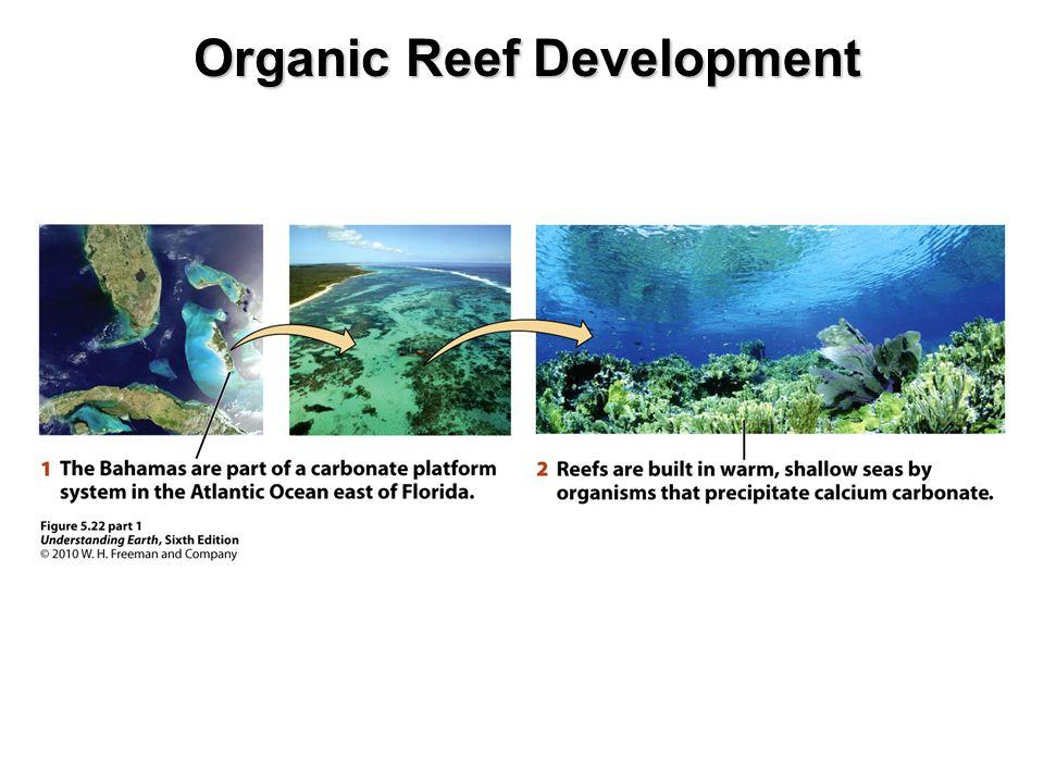 Organic Reef Development
