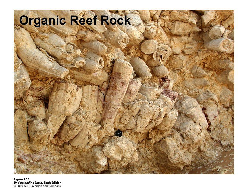 Organic Reef Rock