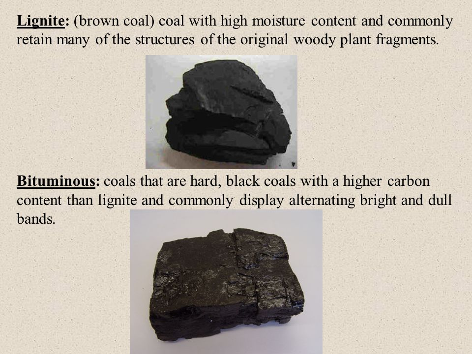Lignite: (brown coal) coal with high moisture content and commonly retain many of the structures of the original woody plant fragments.