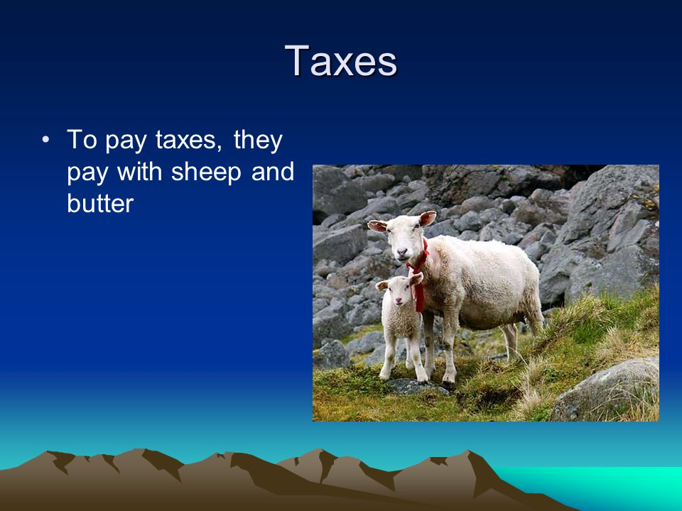 Taxes To pay taxes, they pay with sheep and butter