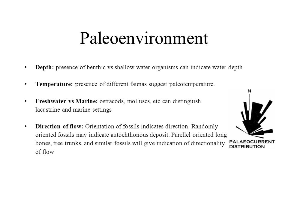 Paleoenvironment Depth: presence of benthic vs shallow water organisms can indicate water depth.