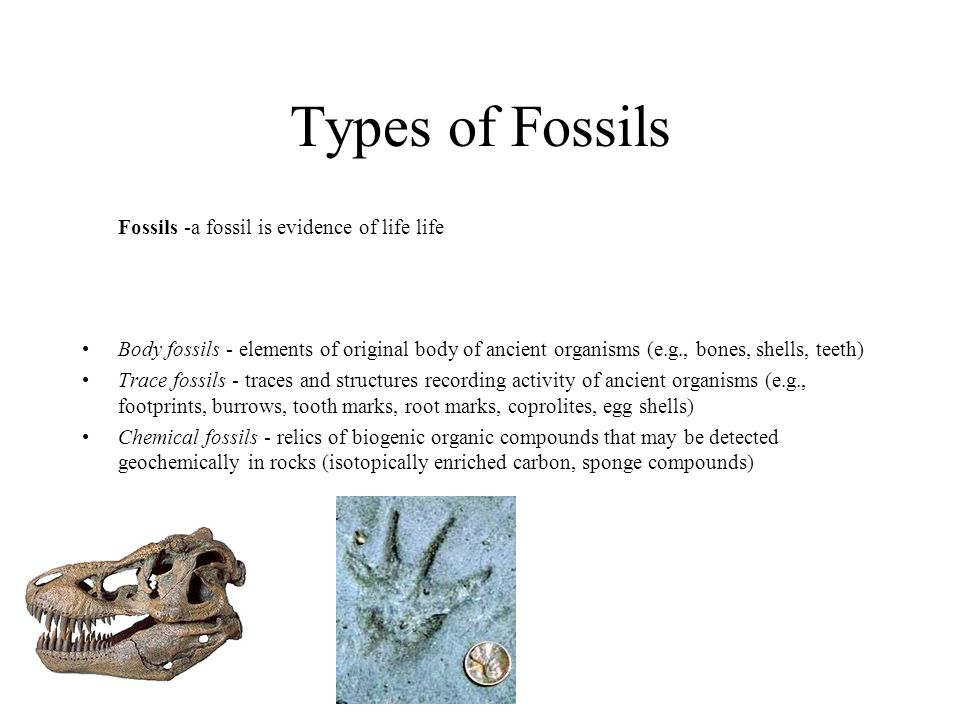 Types of Fossils Fossils -a fossil is evidence of life life
