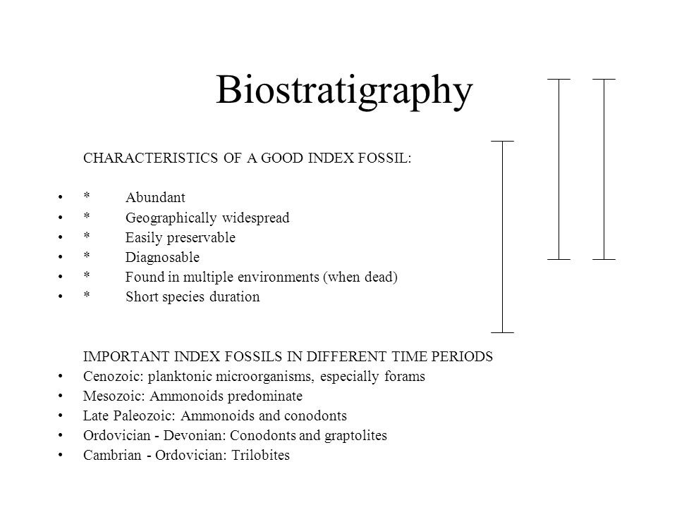 Biostratigraphy CHARACTERISTICS OF A GOOD INDEX FOSSIL: * Abundant